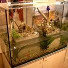 Aquarium jetzt mit Deckel!