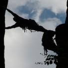 unterstützung (kleine baustelle) am märchenturm