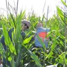Ohne Mais kein Preis - Verschlüsselung für einen Cache