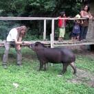 Näher kann man einem Tapir kaum kommen!