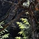 So muß ein Märchenwald aussehen - unterwegs in den Schlüchten im Brandgebiet