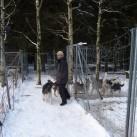 Lutz und seine Hunde