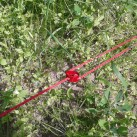 Der CamRing im Einsatz - mit Libelle