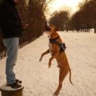 Bild 8: Action beim Schneewandern von Ingrid