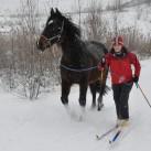 Bild 4: Winterausflug auf 6 Beinen mit Sandra