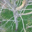 Schwindelfreiheit ist gefragt beim Baumklettern