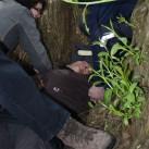 Eingeklemmt zwischen den Bäumen: Epileptischer Anfall *
