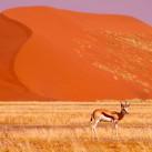 Malerische Farben und Tiere in der Namib-Wüste