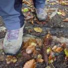 Der Saar-Hunsrück-Steig: naturnahe Wanderwege so weit die Füße tragen