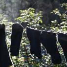 Socken trocknen an der frischen Luft
