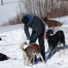 ...oder mit Huskies unterwegs ist.