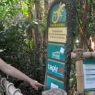 Am tapir-Freigehege im Gondwanaland