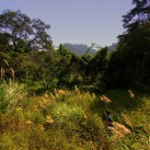 Das Gras verschluckt den Weg und auch mich im Cat-Ba Nationalpark (Vietnam).