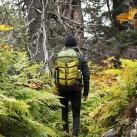 Mit dem Muir Woods im Wald (Foto: Boreas)