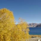Herbst am Pangong Lake mit dem Unna