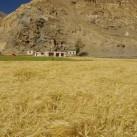 Erntezeit im Markhatal- das Unna neben einem Gerstenfeld