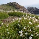 Flora auf Saltee Island