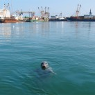 Besucher im Hafen