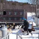 Vorbereitung Hundeschlittentour in Schweden