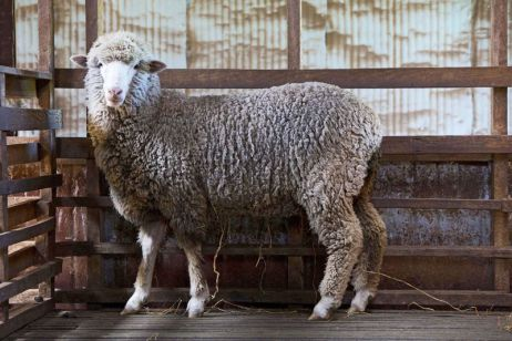 Wolle im Fokus – Teil II: Wollpflege