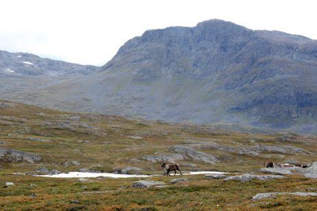 Wanderung des nördlichen Kungsledens im September- Von Nikkaloukta nach Ritsem