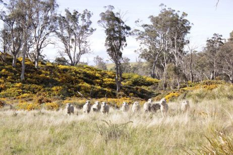Wolle im Fokus – Teil III: Über die Welt der Schafe