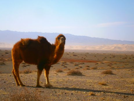 Im Land der Nomaden