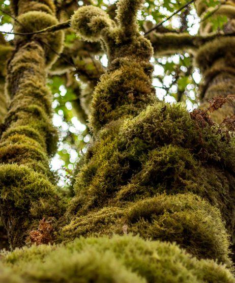 Regenwald im letzten Eck der USA
