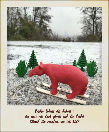 tapir-Fotorätsel im Advent: Mitmachen und gewinnen – 1. Advent