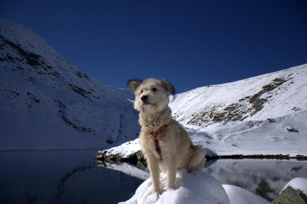 Kletterausrüstung Für Hunde : Reiseberichte & informationen mit dem düdo ins