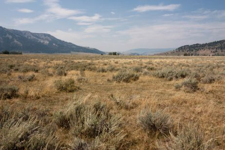 USA: Bärensuche in den Rockies