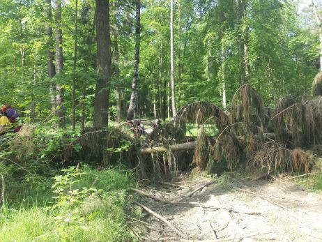 umgestürzte Bäume nach den Winterstürmen