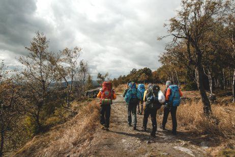 Birkenwald auf dem Hohen Schneeberg