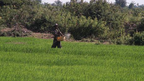 Arbeiter auf einem Reisfeld