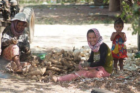 Frauen bearbeiten Taro-Wurzeln