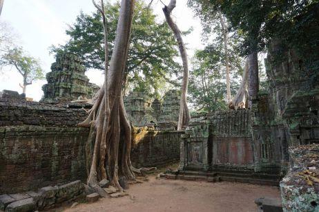 Ta-Prohm-Tempel