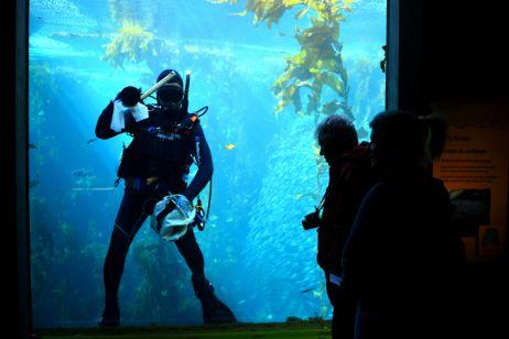 Meeresaquarium in Monterey