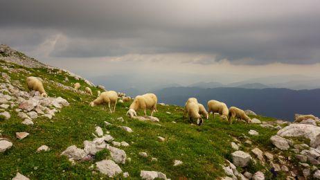 Dunkle Wolken ziehen auf. Was uns beunruhigt, stört die Schafe rein gar nicht