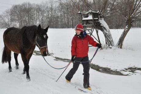 langlaufen mit pferd