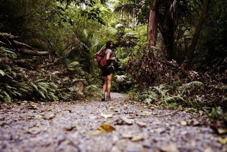 Auf in den Dschungel -