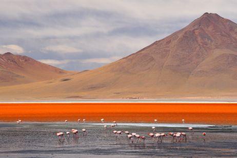 Flamingos an der Laguna Colorada