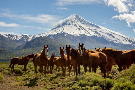 Pferde am Fuße des Vulkan Lanin in Argentinien