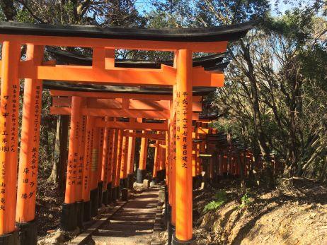 Die berühmten roten Tore von Kyoto