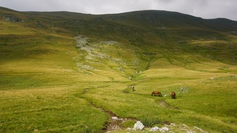 Einige Pferde laufen ohne Einzäunung frei in der Landschaft herum