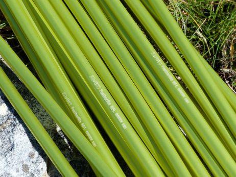 Umweltfreundliches Gestänge: 8,7 mm DAC New Featherlight Green