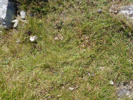 Testgelände: Begraster Boden, mit Steinen durchsetzt