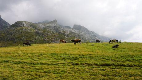 Kühe gibt es im Korabgebirge auch