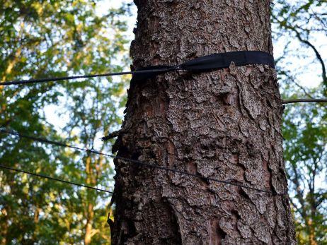 Wichtig für die Natur: Baumschutzband