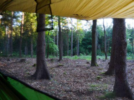 Hübscher Ausblick mitten in den sächsischen Wald!
