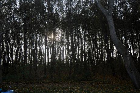 Geocachen: Abenteuer direkt vor der Haustür